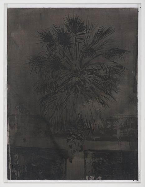 Image Inquiète (Palmier), 2013, Acrylique Sur Papier Encadrée Sous Verre, 67 X 52 Cm (26 X 20 In)